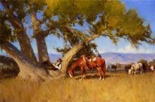 Cottonwood Dreams by Bill Anton