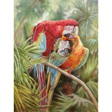 The Parrots Gallery Wrap