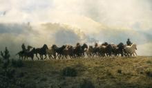 Dream Herd by Norm Clasen