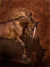 Horse Dancer by Robert Dawson