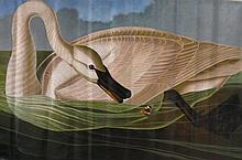 JOHN JAMES AUDUBON [AFTER] - Oil on canvas