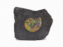 Colorful Gem Ammonite, Canada, Cretaceous