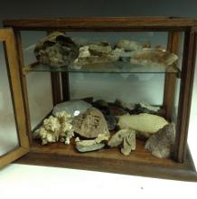 An early 20th century oak table top museum type display cabinet, hinged doo