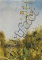 Edwin Lord Weeks - 'Flowering Agave, Florida'