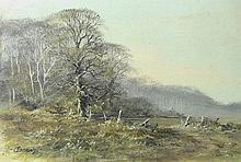 Ceasar Smith (British, 20th Century): a woodland landscape, oil on canvas, signed lower left, 13 by