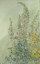 Kathleen Hutchen (British illustrator): foxgloves, watercolour, signed lower left, 67 by 43cm.