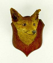 Taxidermy: a red fox head mounted to a shield form wall plaque, 33cm high.