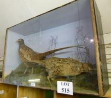 Taxidermy interest: A brace of pheasants in a glass case in naturalistic setting est: £80-£120 (AF7)