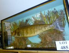 Taxidermy interest: a pike in naturalisic setting, cased bears label 'caught by Rev'd D S Humpherys at Oulton Broad January 18th 1939Total weight 7lbs 13ozs' est: £280-£320 (AF6)