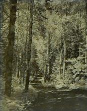 Framed Forest Scene Photograph
