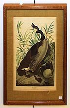 J. J. Audubon Print, Canada Goose