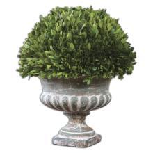 Preserved Boxwood, Garden Urn