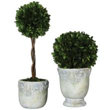 Preserved Boxwood, Ball Topiaries, S