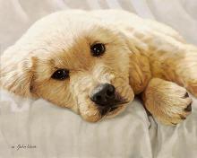 John Weiss - Best Loved Breeds: Golden Retriever