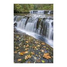 Donald Paulson - Sweet Creek Falls I