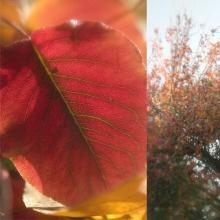 Original-Jennifer Broussard-Autumn Leaves II
