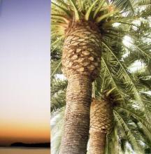 Original-Jennifer Broussard-Palm Trees I