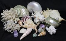 A Collection of Unusual Coral & Seashells