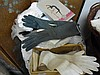 Collection of gloves including pair kid gloves and table cloth