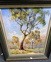 Oil on board, Gum trees