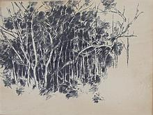 David Blackburn (1939-) (Woodland Scene, Bairnsdale) Trees 1965 Charcoal