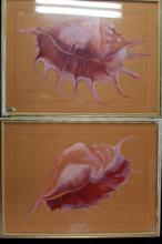 Garry Combe 20th Century, Australian Conch 1 + Conch 2, 1980 Watercolour on paper