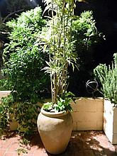 A large urn form pot with happy plant