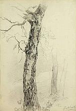 Gabriel, P.J.C. (1828-1903). (Study of a tree). Drawing, pencil, 17,5x25 cm