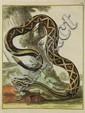 [Zoology]. Vosmaer, A. (Algemeene natuurkundige en