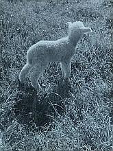 Besnyö, E. (1910-2003). (A lamb in a field).