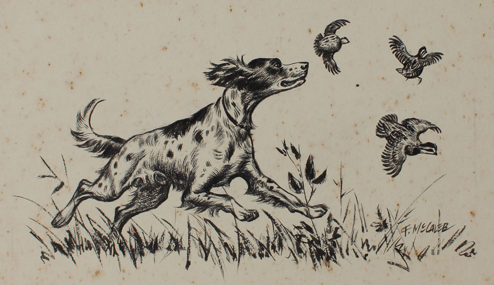 FRED MCCALEB SPANIEL ILLUSTRATION
