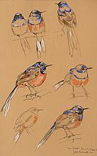 Jean De La FONTINELLE (1900-1974) .   Etude d'oiseau, 1940.   Gouache et crayon .   Signé, daté et avec un envoi en bas à droite .   46 x 29 cm à vue .
