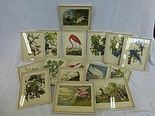 Sixteen 19th Century framed and glazed book plates