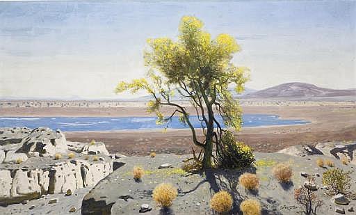 Palo Verde Tree at the Salton Sea
