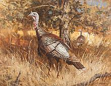 Timberlake Turkeys