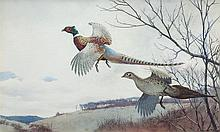 Cock and Hen Pheasant