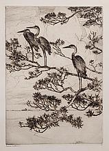 Herons in a Pine Tree