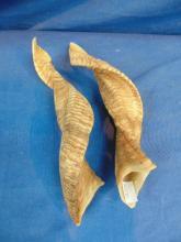 2 Rams Horns