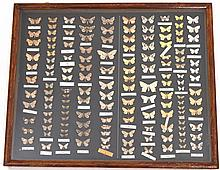 A Mounted Collection Of Moths In A Glazed Mahogany Case