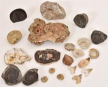 A Selection Of Various Fossils (Qty)