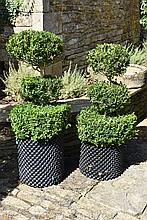 A Healthy And Well Maintained Pair Of Triple Etage Box Trees
