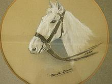 A watercolour and pastel portrait of a grey horse,