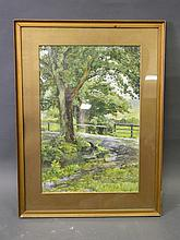 An early C20th watercolour, rural scene with stream and large trees, image 17½'' x 11½''