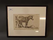 A C19th etching, study of three donkey, 9½'' x 6''