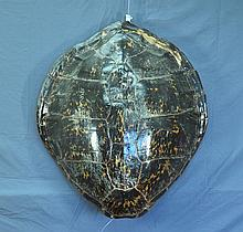 Large Pacific Turtle Shell