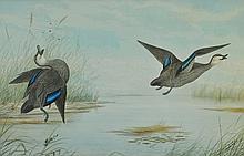 CAYLEY (Snr), Neville Henry (1853-1903) Ducks in