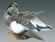 Preening Widgeon Drake by Ward Brothers
