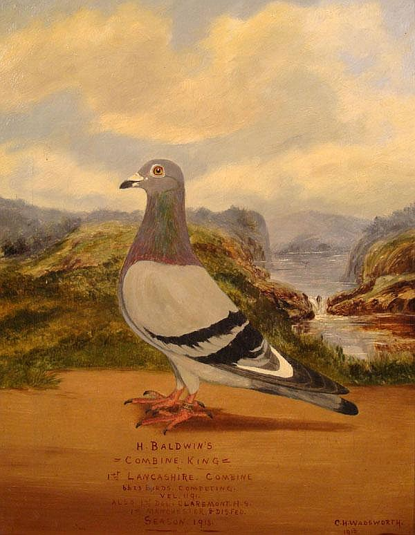 C H Wadsworth 1913 Oil on canvas Pigeon Portrait