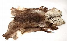 Taxidermy: A full reindeer skin, approximately 64