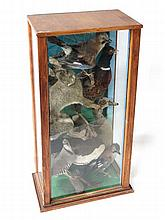 Taxidermy: A cased group of Victorian taxidermy